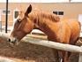 Лошадки невысокие, но с буйным нравом