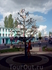 """Символическое Дерево Керчь с разными именами города на протяжении 2600 лет: Черкио, Керх, Пантикапей и т.д. уже увешанное ленточками """"желаний"""""""