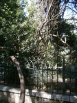 почти мангровые  заросли ялты