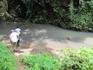 молочные реки