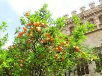 Кроме города контрастов я еще бы назвала Валенсию апельсиново-мандариновым раем, поскольку ни в одном городе раньше я не видела такого количества цитрусовых ...