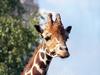 Фотография Московский зоопарк