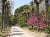 Фотография Никитский ботанический сад