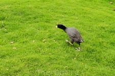 Название птиц не знаю, но по манере поведения - это Любопытки
