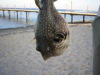 рыба- шар.