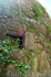 Старинный неиспользуемый дом в Монсанту.