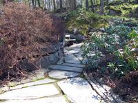 парк Сапокка в мае. Очень много кустов рододендрона. Уже бутоны, скоро зацветут!