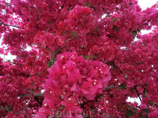 Опять цветы-может вид азалии? я не ботаник...