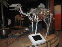 А это верблюд... любопытный макет, чтобы каждый понял, как устроено это уникальное животное.