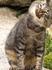 кошка пляжа Са Боадейя (Sa Boadella) - очень ласковое создание! Когда я подошла к ней и протянула руку - она подпрыгнула прямо под мою ладонь и прогнула ...