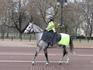 Девушка - конный полицейский