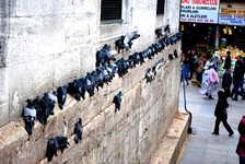 Голуби на стенах Новой мечети
