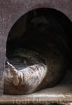 Видимая часть спящего вомбата