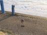 Одинокая птица - ждет рыбки у домика, где делают вкуснейшую сельдь и угорь. Стоит уже так 2 часа.