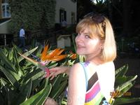 Цветок Стрелиция- символ Мадейры.