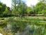 Маленький пруд, в котором весело квакали  лягушки.