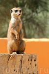 У него всё под контролем :)) пока все отдыхают, стоит на вахте... Зоопарк Фригиа - Friguia Park - между Сусом и Хаммаметом
