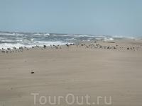 море и чайки - ну чем не курорт ?:)