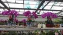 """Таки орхидеи выращивают в ботаническом саду """"Дзифа"""" г. Бэдайхе"""