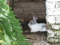 Кролика заприметили