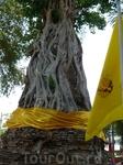 А здесь ступка  разрушенного храма в корнях дерева