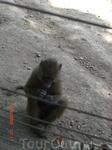 Зоопарк в Хамат Гадер! обезьянка жует жвачку!!!