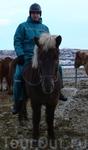 исландский наездник