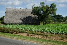 долина Виньялес. здесь произрастает самый душистый табак