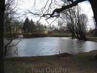 Вид на пруд от древней ветлы.