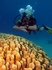 Открытый космос под водой, в районе кораллового заповедника Эйлата