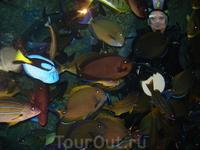 Aquarium of the Pacific!