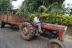 Местный фермер.