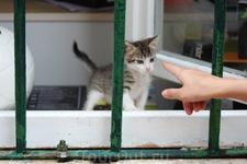 Очаровательный котенок.....