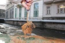 река Тепла,листочек,который пролежал в воде - минерализовался