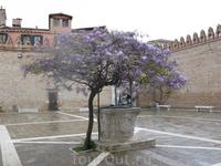 Двор Дворца - самый большой двор частного дома в Венеции