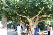У храма Двенадцати апостолов в Капернауме