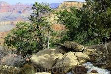 Первые дни весны... Довольно тепло, но снег еще лежит на тропинках нац. парка и  склонах каньона.