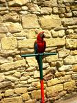 как и в любом другом курортном городе различные птицы, животные с которыми фотографируются туристы