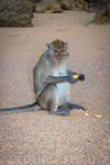 Еще обезьянка