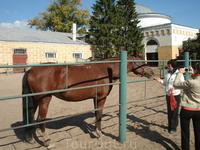 Общение с животными нам доставило огромное удовольсвие. Лошадки красивые, чистые, умные, приветливые.