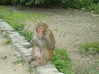 Вот такие жители обитают на острове обезьян.
