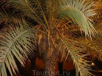 Наша пальма под балконом.