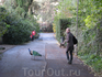 Вот так в римском зоопарке разгуливают павлины. Павлин слева :))