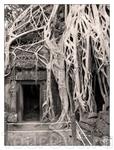 Ангкор Ватт 12