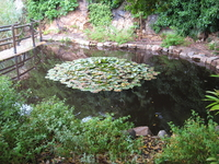 Вот такой небольшой прудик есть в саду, рядом мостик, все небольшое и как будто сказочное...