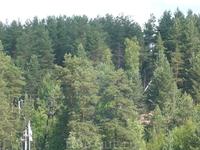 Пухтолова гора