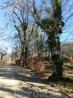 Совершенно фантастические деревья. Я совсем не помню как они выглядели осенью и летом, но зимой они выглядят сказочно.