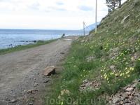 После ливня. Прибайкальская растительность. Маки
