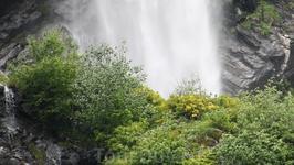 азалии возле водопада