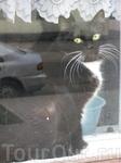 Котофеич в окне...